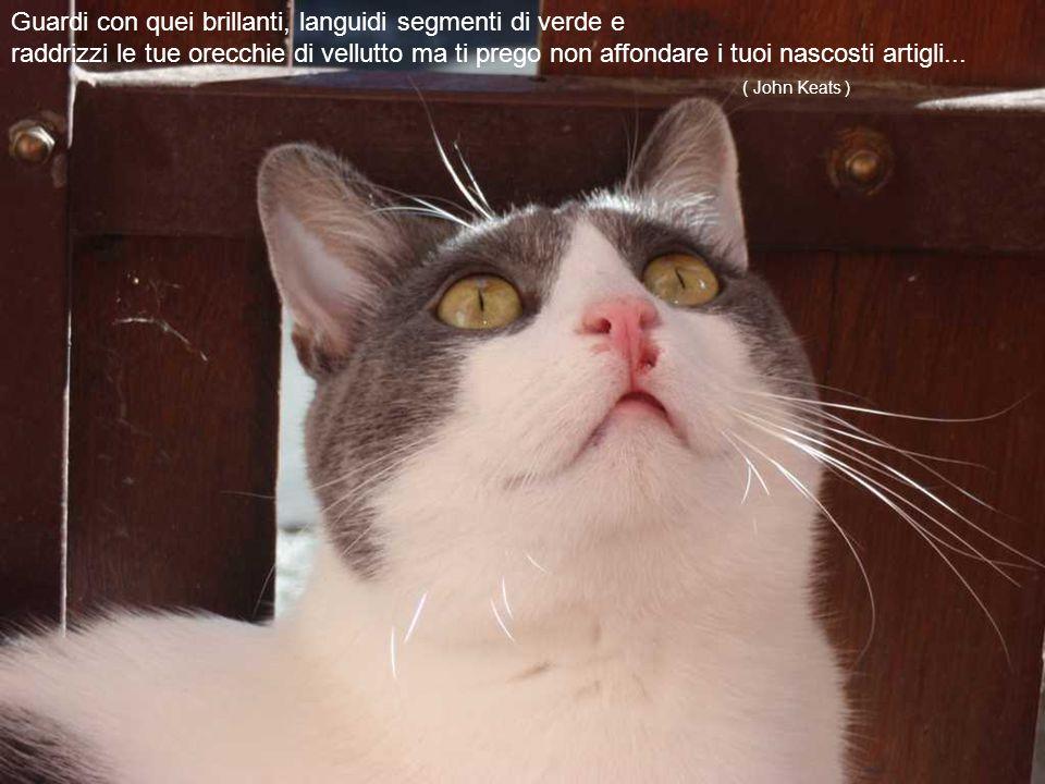 I gatti sono stati messi al mondo per contraddire il dogma, secondo il quale tutte le cose sarebbero state create per servire l'uomo.