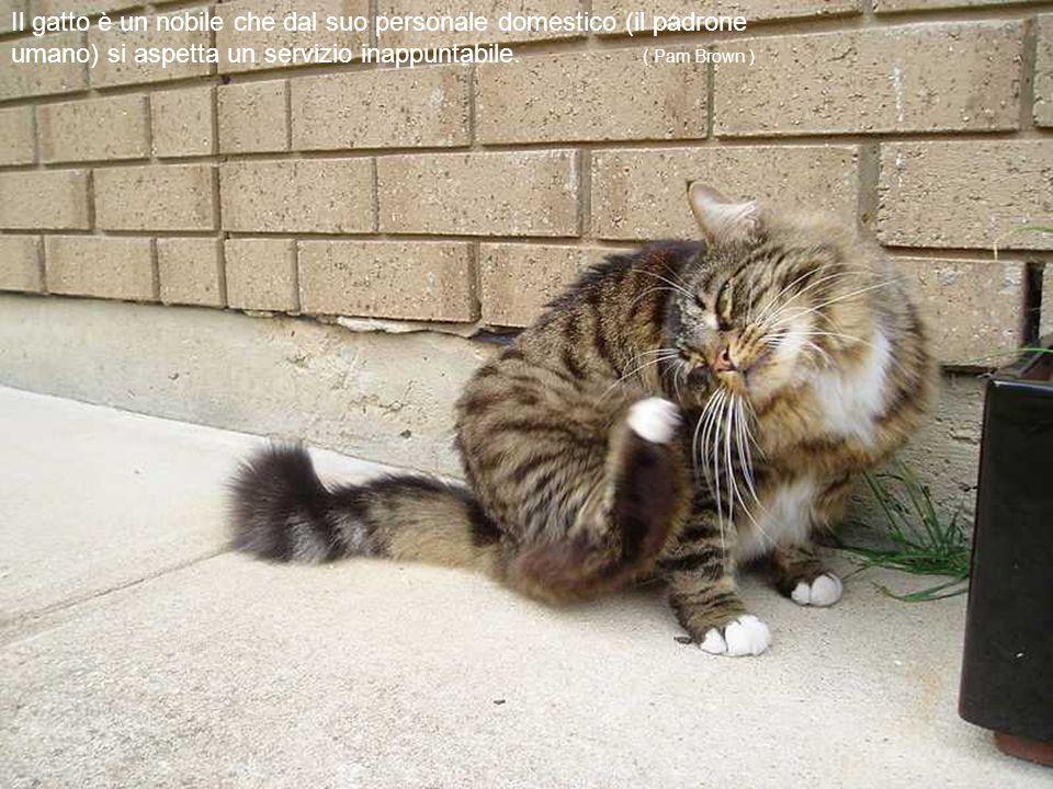 I gatti sono spontanei, puri e non conoscono compromessi, soprattutto in merito all'onestà dei propri sentimenti.