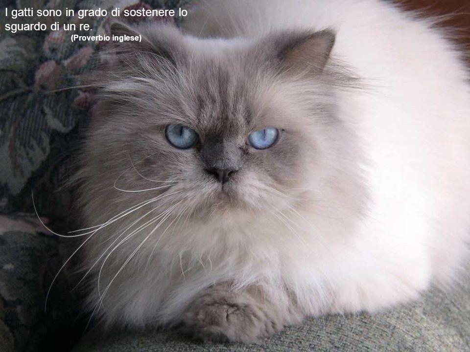 Dio ha creato il gatto per dare all uomo il piacere di accarezzare la tigre. (Fernand Méry)