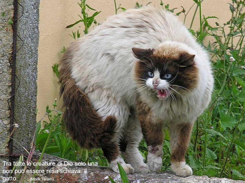 I gatti sono in grado di sostenere lo sguardo di un re. (Proverbio inglese)