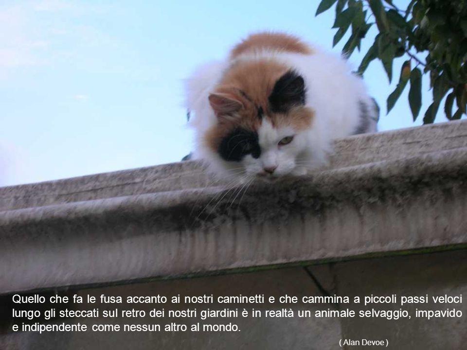 Tra tutte le creature di Dio solo una non può essere resa schiava: il gatto. (Mark Twain)