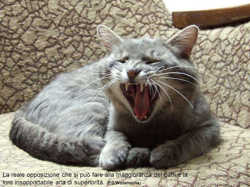 I gatti sono impareggiabili nel rifuggire le responsabilità. ( H. Thomas Yu )