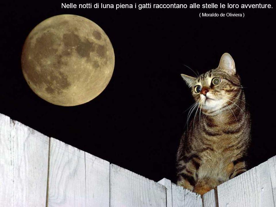 La reale opposizione che si può fare alla maggioranza dei gatti è la loro insopportabile aria di superiorità.