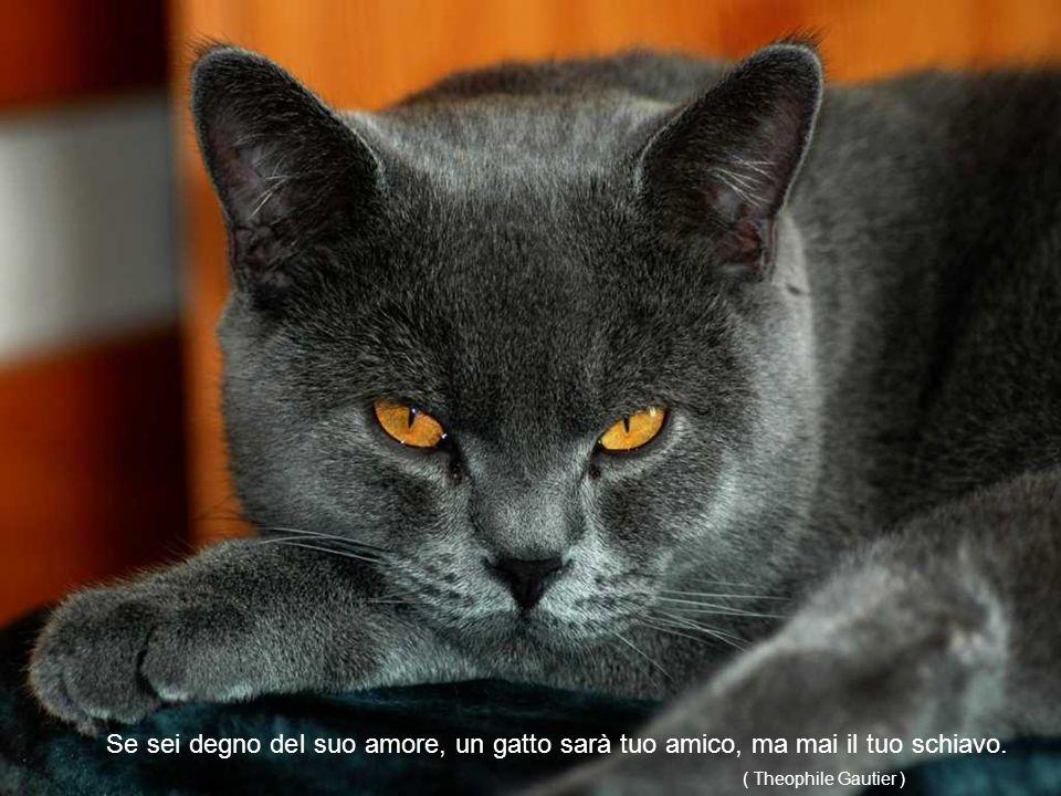 Il gatto è mistero e come il mistero non viene mai svelato (Anonimo)