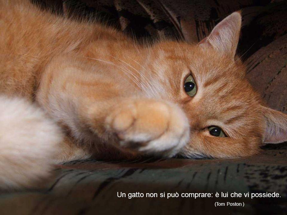 I gatti come gli uomini sono degli adulatori. (William S. Landor)