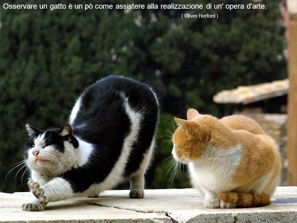 Un gatto non si può comprare: è lui che vi possiede. (Tom Poston )