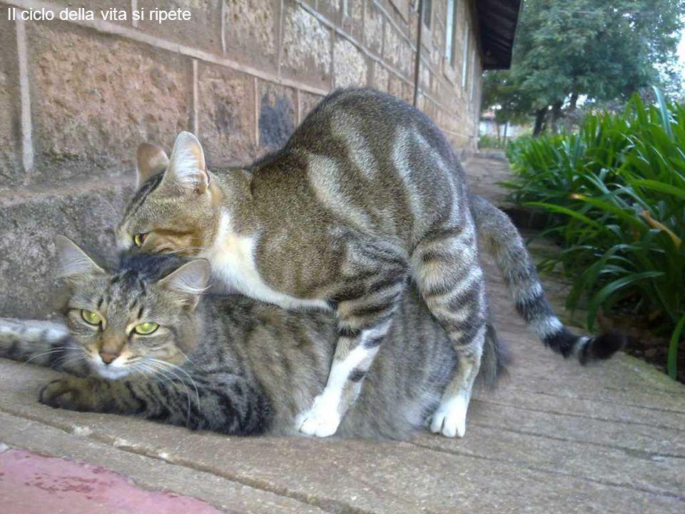 I gatti sono infinitamente più amichevoli dei cani.