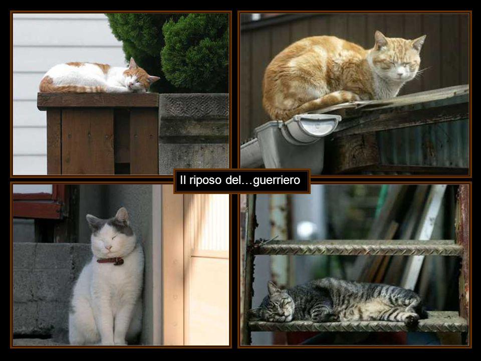Mi era stato detto che l addomesticamento con i gatti è molto difficile.