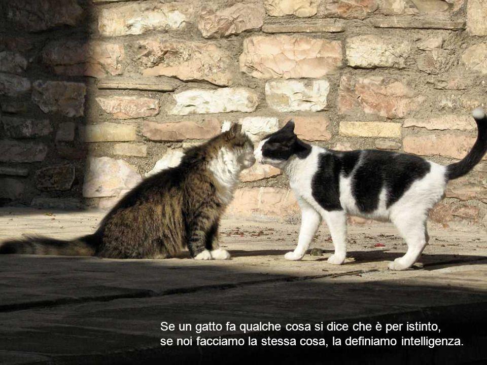Se sei degno del suo amore, un gatto sarà tuo amico, ma mai il tuo schiavo. ( Theophile Gautier )