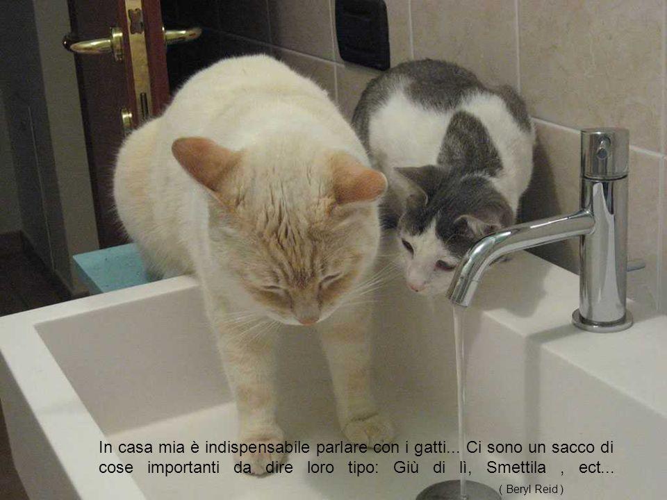Per me, uno dei piaceri della compagnia del gatto è la loro devozione alla comodità.