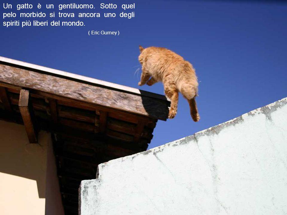 In casa mia è indispensabile parlare con i gatti...