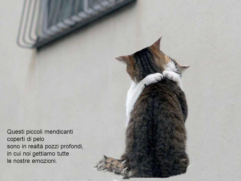 Un gatto è un gentiluomo.