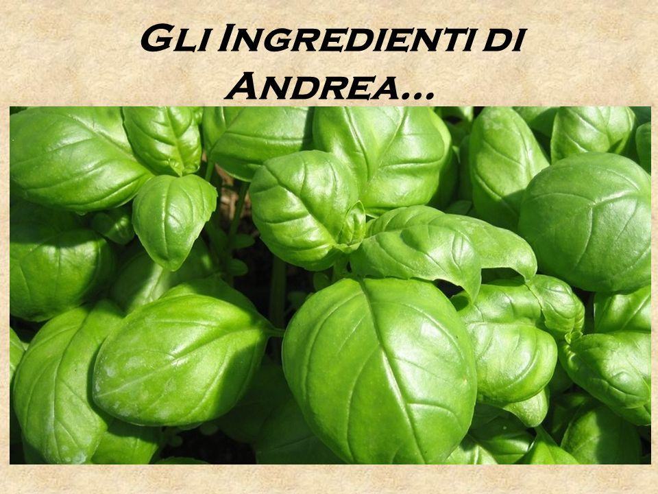 Gli Ingredienti di Andrea…