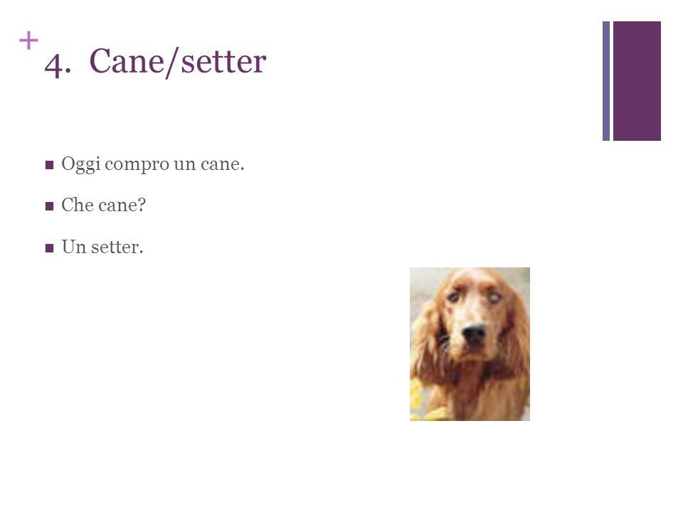 + 4. Cane/setter Oggi compro un cane. Che cane? Un setter.