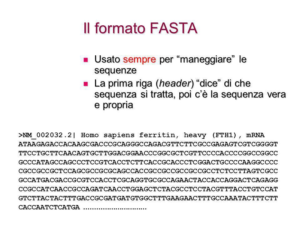Il formato FASTA Usato sempre per maneggiare le sequenze Usato sempre per maneggiare le sequenze La prima riga (header) dice di che sequenza si tratta, poi c'è la sequenza vera e propria La prima riga (header) dice di che sequenza si tratta, poi c'è la sequenza vera e propria >NM_002032.2| Homo sapiens ferritin, heavy (FTH1), mRNA ATAAGAGACCACAAGCGACCCGCAGGGCCAGACGTTCTTCGCCGAGAGTCGTCGGGGT TTCCTGCTTCAACAGTGCTTGGACGGAACCCGGCGCTCGTTCCCCACCCCGGCCGGCC GCCCATAGCCAGCCCTCCGTCACCTCTTCACCGCACCCTCGGACTGCCCCAAGGCCCC CGCCGCCGCTCCAGCGCCGCGCAGCCACCGCCGCCGCCGCCGCCTCTCCTTAGTCGCC GCCATGACGACCGCGTCCACCTCGCAGGTGCGCCAGAACTACCACCAGGACTCAGAGG CCGCCATCAACCGCCAGATCAACCTGGAGCTCTACGCCTCCTACGTTTACCTGTCCAT GTCTTACTACTTTGACCGCGATGATGTGGCTTTGAAGAACTTTGCCAAATACTTTCTT CACCAATCTCATGA..............................