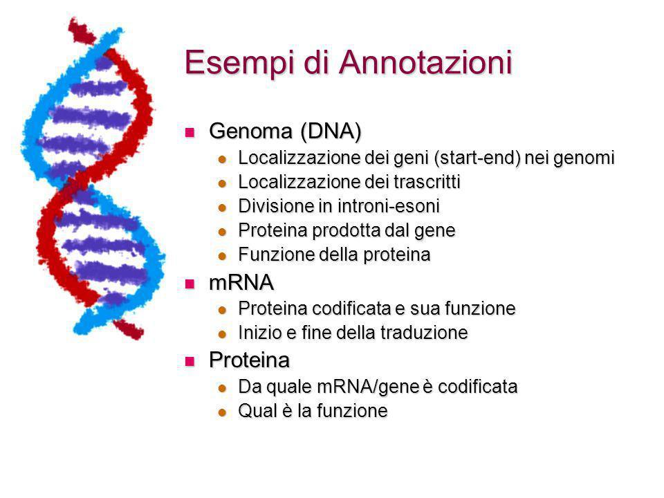Esempi di Annotazioni Genoma (DNA) Genoma (DNA) Localizzazione dei geni (start-end) nei genomi Localizzazione dei geni (start-end) nei genomi Localizzazione dei trascritti Localizzazione dei trascritti Divisione in introni-esoni Divisione in introni-esoni Proteina prodotta dal gene Proteina prodotta dal gene Funzione della proteina Funzione della proteina mRNA mRNA Proteina codificata e sua funzione Proteina codificata e sua funzione Inizio e fine della traduzione Inizio e fine della traduzione Proteina Proteina Da quale mRNA/gene è codificata Da quale mRNA/gene è codificata Qual è la funzione Qual è la funzione
