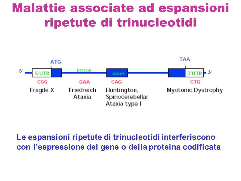 Malattie associate ad espansioni ripetute di trinucleotidi Le espansioni ripetute di trinucleotidi interferiscono con l'espressione del gene o della p