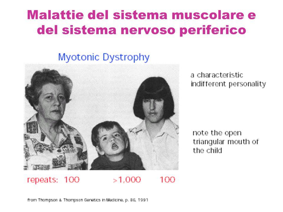 Malattie del sistema muscolare e del sistema nervoso periferico