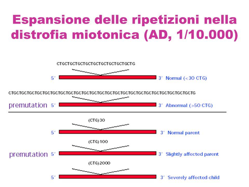 Espansione delle ripetizioni nella distrofia miotonica (AD, 1/10.000)