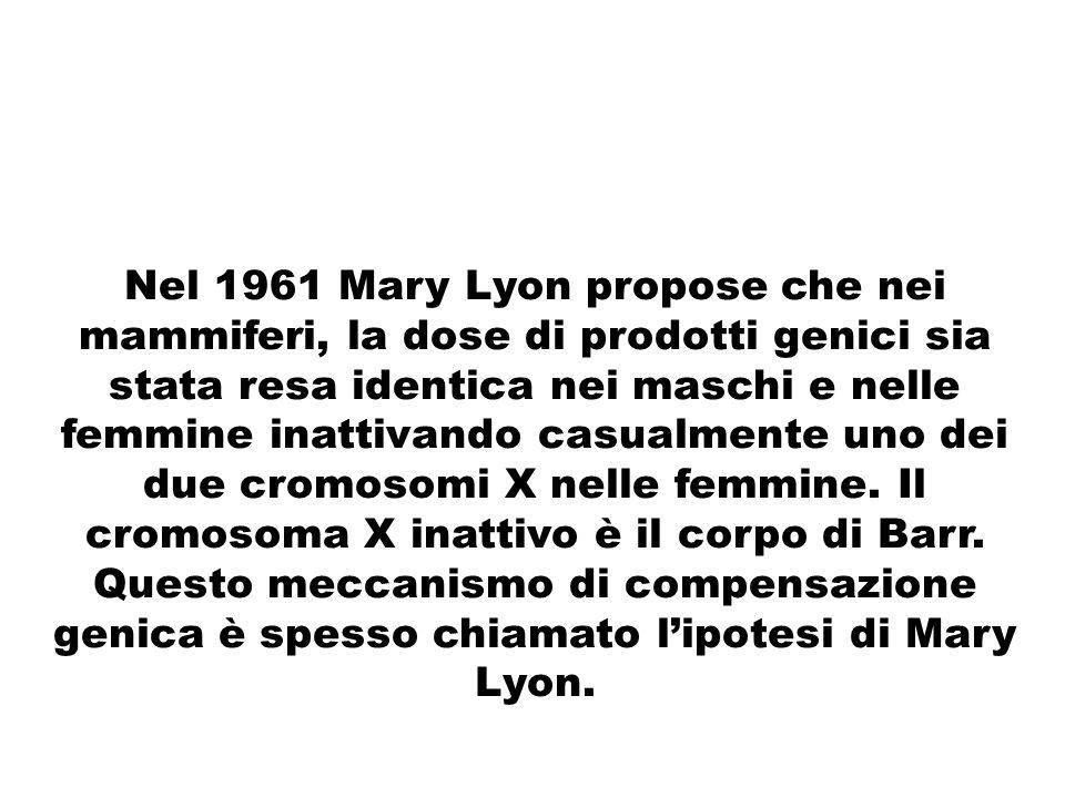 Nel 1961 Mary Lyon propose che nei mammiferi, la dose di prodotti genici sia stata resa identica nei maschi e nelle femmine inattivando casualmente un
