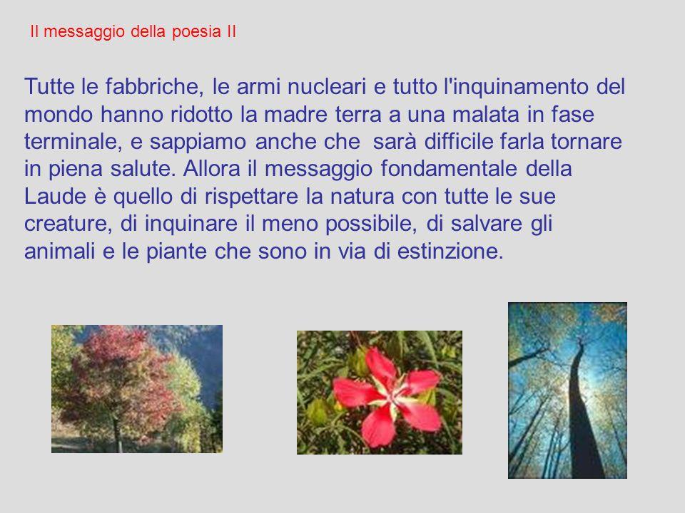 Il messaggio della poesia Il messaggio centrale del Cantico è il ringraziamento di San Francesco (e con lui di tutta l'umanità), a Dio e alla sua bont