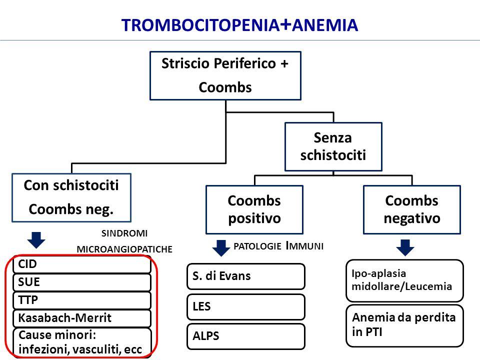 Striscio Periferico + Coombs Con schistociti Coombs neg. Senza schistociti Coombs positivo Coombs negativo S. di EvansLESALPS Ipo-aplasia midollare/Le