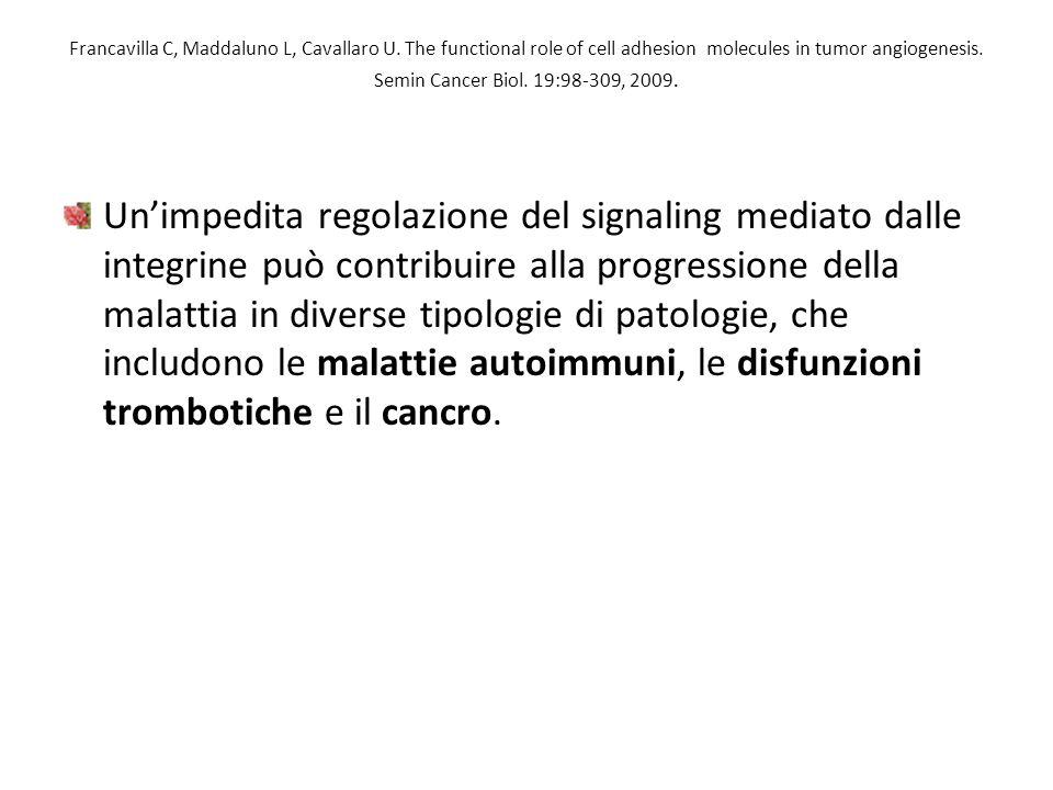 Francavilla C, Maddaluno L, Cavallaro U. The functional role of cell adhesion molecules in tumor angiogenesis. Semin Cancer Biol. 19:98-309, 2009. Un'