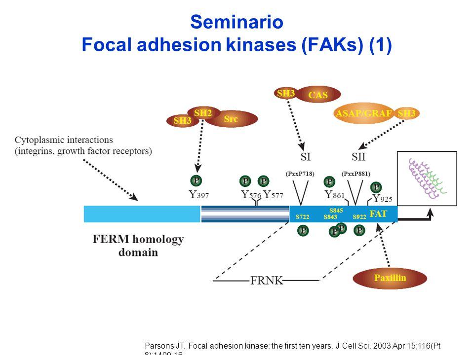 Seminario Focal adhesion kinases (FAKs) (1) Parsons JT. Focal adhesion kinase: the first ten years. J Cell Sci. 2003 Apr 15;116(Pt 8):1409-16.