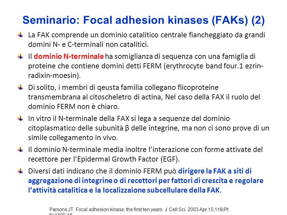 Seminario: Focal adhesion kinases (FAKs) (2) La FAK comprende un dominio catalitico centrale fiancheggiato da grandi domini N- e C-terminali non catal