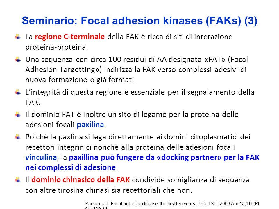 Seminario: Focal adhesion kinases (FAKs) (3) La regione C-terminale della FAK è ricca di siti di interazione proteina-proteina. Una sequenza con circa
