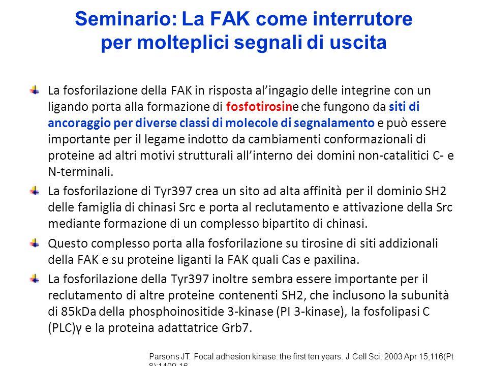 Seminario: La FAK come interrutore per molteplici segnali di uscita La fosforilazione della FAK in risposta al'ingagio delle integrine con un ligando