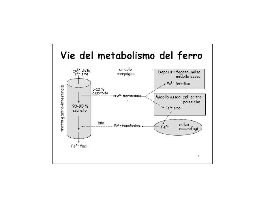 11 Il ferro nella dieta Alimenti ricchi in Fe:  Carni, legumi, frutta, cereali Cottura = rottura legami Fe-proteina  Facilita l'assorbimento pH acido nello stomaco: Fe +++  Fe ++  Ulcera gastrica impedisce l'assorbimento di Fe  anemia Ascorbato: Fe +++  Fe ++ Braccio di Ferro ha sbagliato tutto: gli spinaci contengono Fe, ma come Fe-fitato, resistente all'azione chimica!