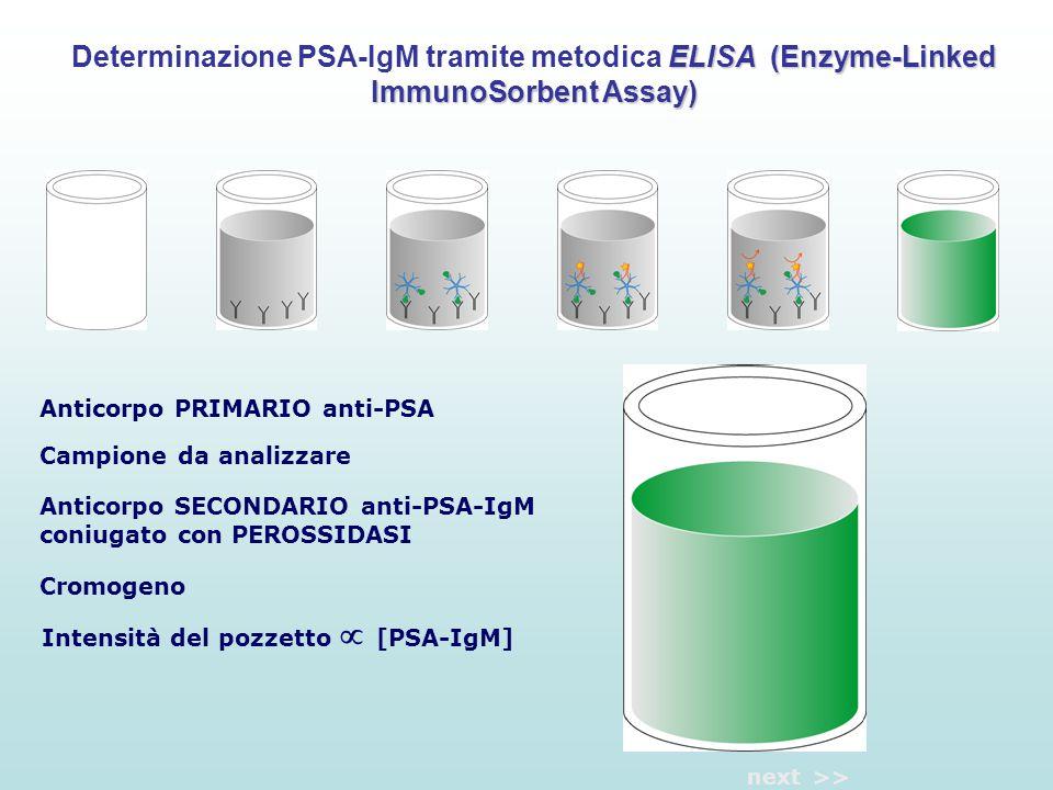 Anticorpo PRIMARIO anti-PSA Campione da analizzare Anticorpo SECONDARIO anti-PSA-IgM coniugato con PEROSSIDASI Cromogeno Intensità del pozzetto  [PSA