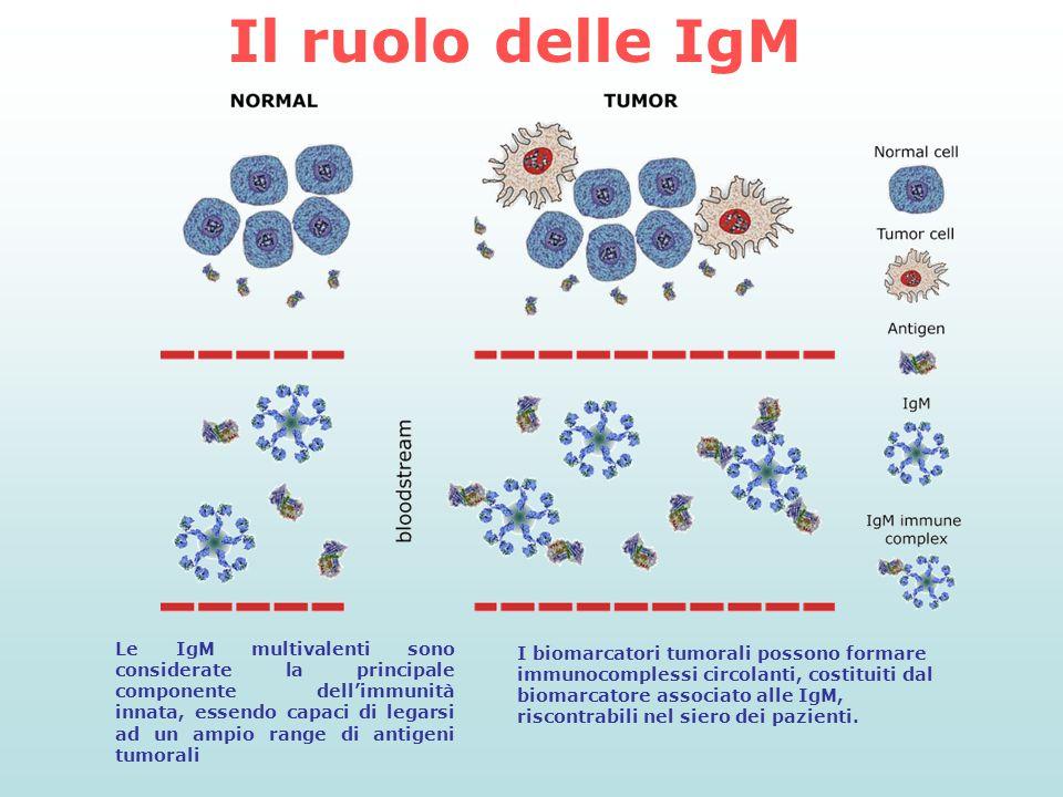 Le IgM multivalenti sono considerate la principale componente dell'immunità innata, essendo capaci di legarsi ad un ampio range di antigeni tumorali I