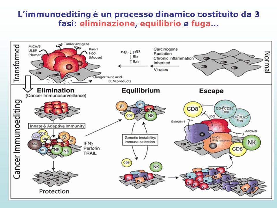 L'immunoediting è un processo dinamico costituito da 3 fasi: eliminazione, equilibrio e fuga…