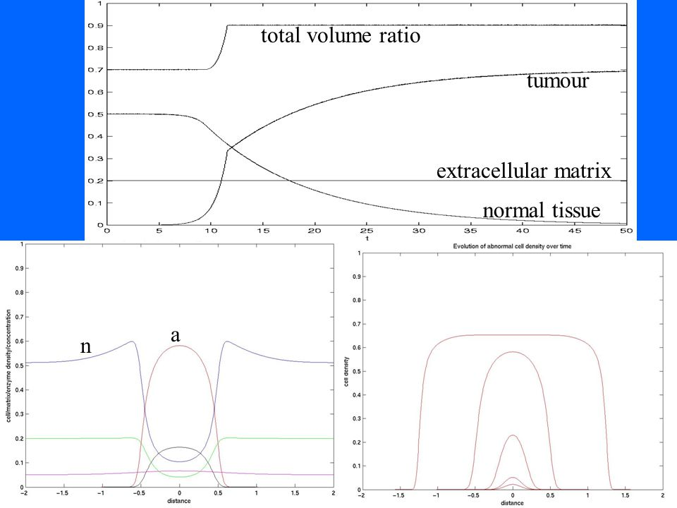 total volume ratio tumour normal tissue extracellular matrix n a