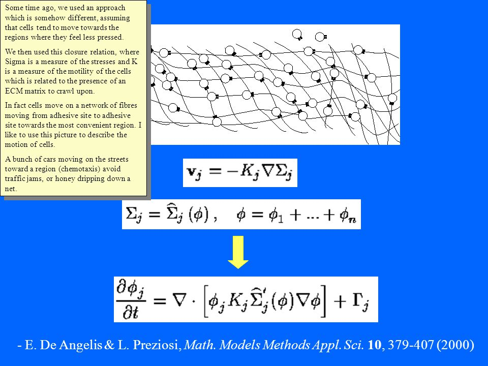 - E. De Angelis & L. Preziosi, Math. Models Methods Appl.