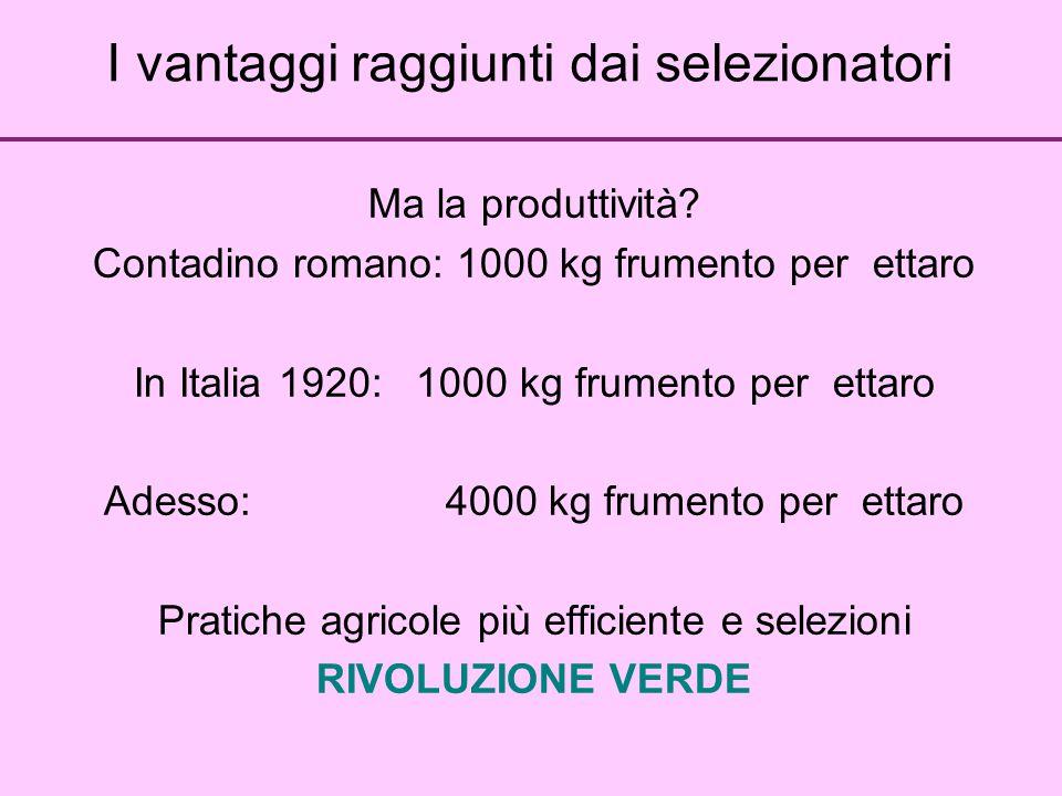 I vantaggi raggiunti dai selezionatori Ma la produttività? Contadino romano: 1000 kg frumento per ettaro In Italia 1920: 1000 kg frumento per ettaro A