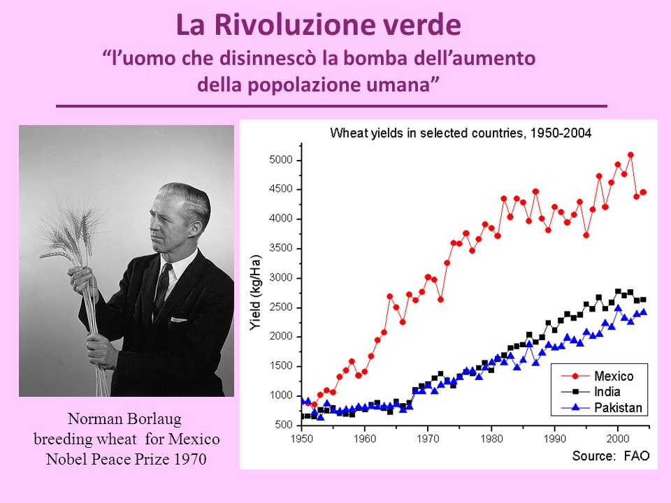"""La Rivoluzione verde """"l'uomo che disinnescò la bomba dell'aumento della popolazione umana"""" Norman Borlaug breeding wheat for Mexico Nobel Peace Prize"""