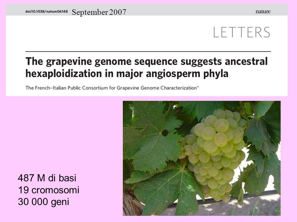 487 M di basi 19 cromosomi 30 000 geni September 2007