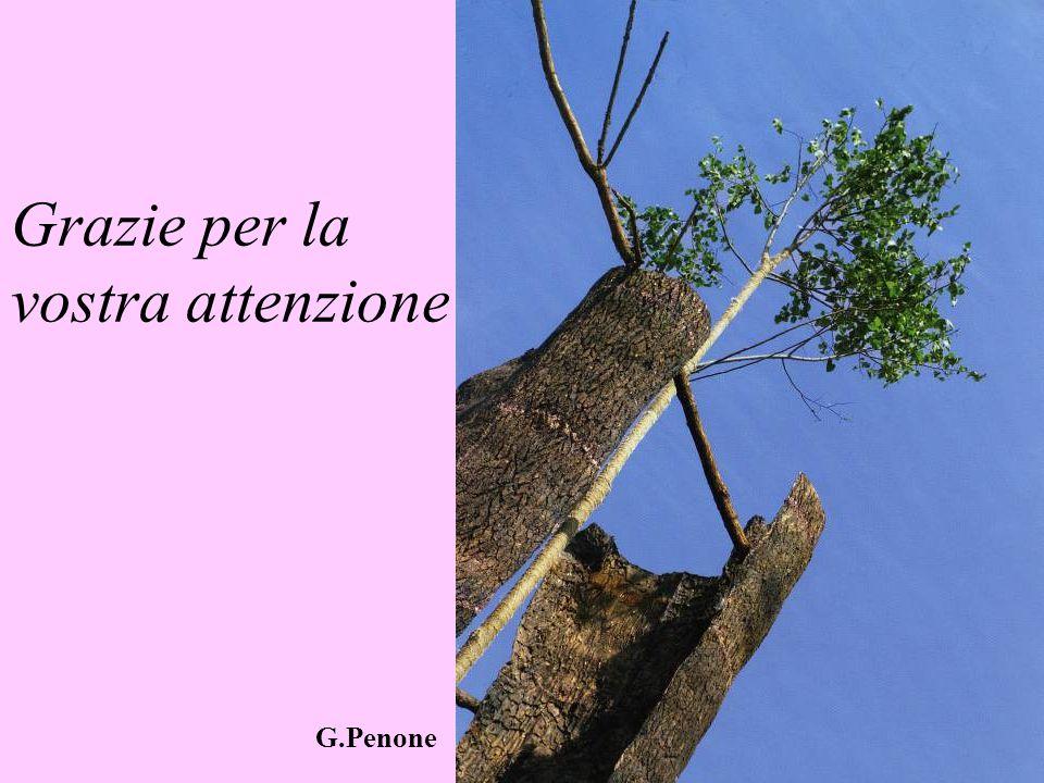 Grazie per la vostra attenzione G.Penone