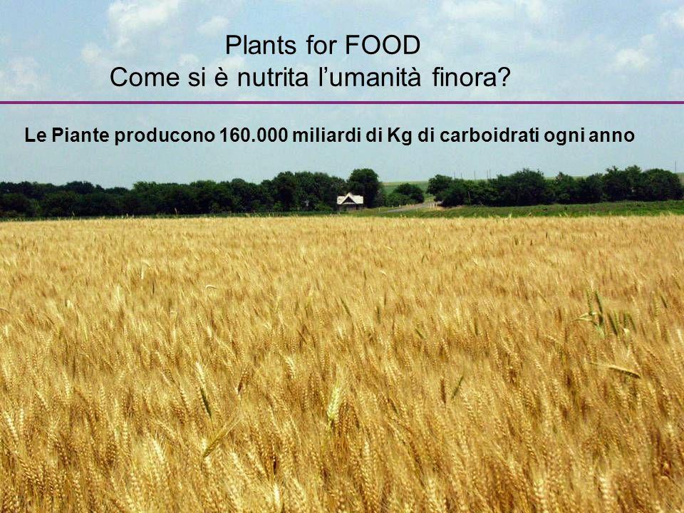 Plants for FOOD Come si è nutrita l'umanità finora? Le Piante producono 160.000 miliardi di Kg di carboidrati ogni anno