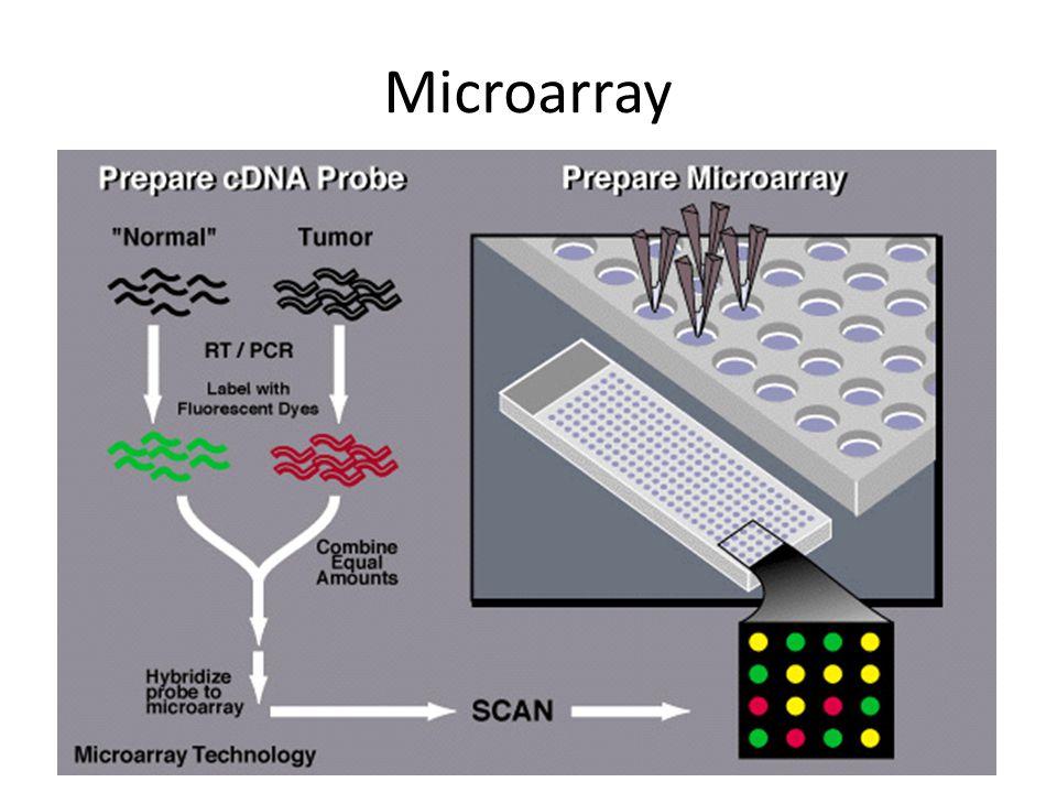 Microarray