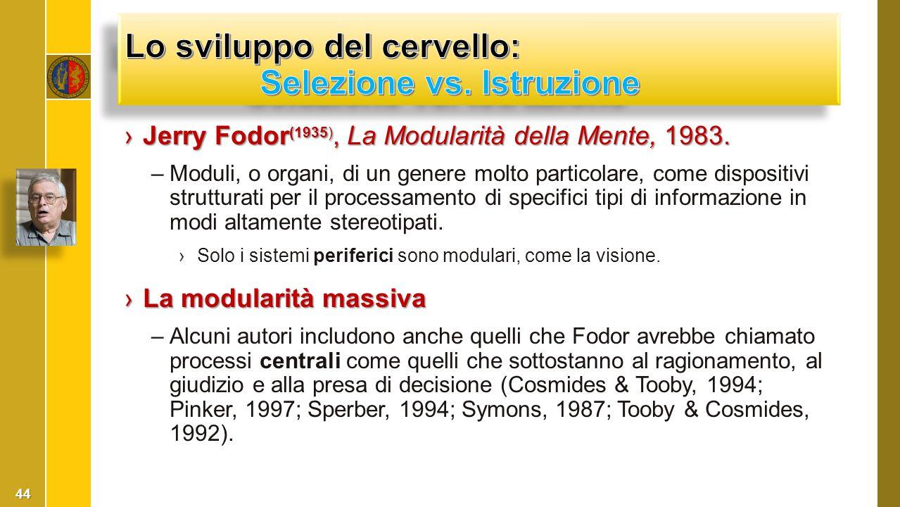 ›Jerry Fodor (1935), La Modularità della Mente, 1983. –Moduli, o organi, di un genere molto particolare, come dispositivi strutturati per il processam