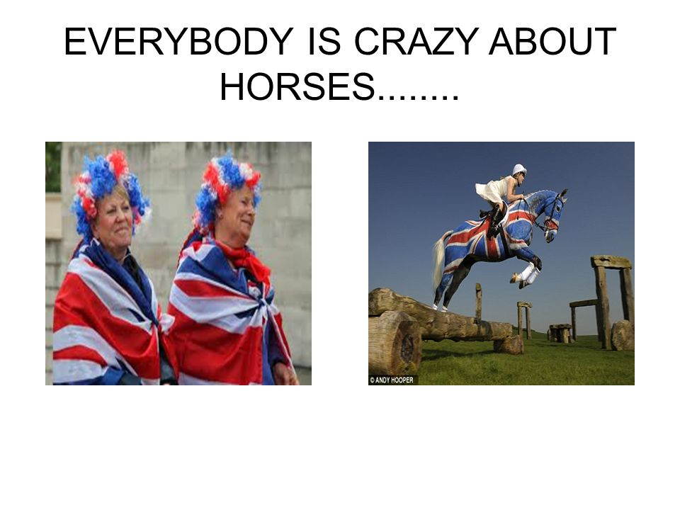 EVERYBODY IS CRAZY ABOUT HORSES........