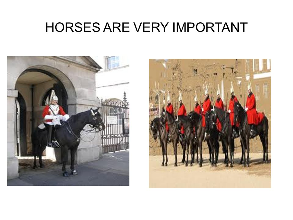 HORSES ARE VERY IMPORTANT
