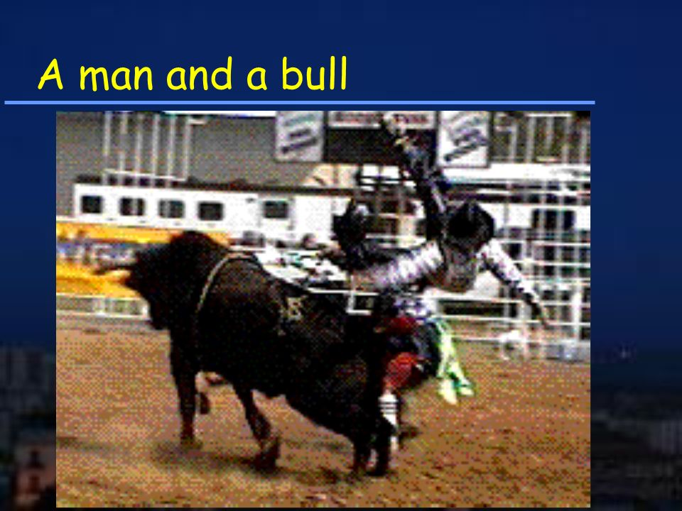 A man and a bull