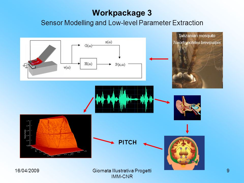 16/04/2009Giornata Illustrativa Progetti IMM-CNR 9 Workpackage 3 Sensor Modelling and Low-level Parameter Extraction PITCH Tanzanian mosquito Toxorhynchites brevipalpis