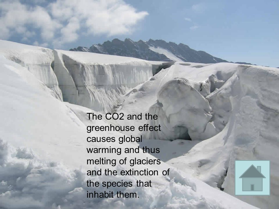 The CO2 and the greenhouse effect causes global warming and thus melting of glaciers and the extinction of the species that inhabit them.