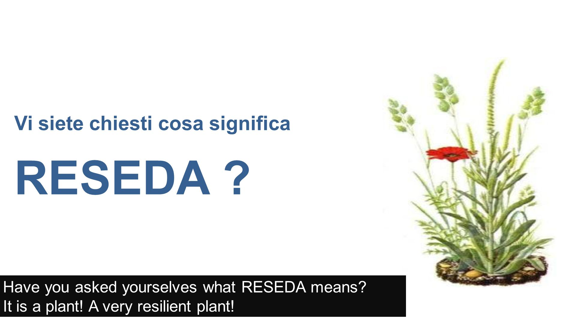 Vi siete chiesti cosa significa RESEDA . Have you asked yourselves what RESEDA means.